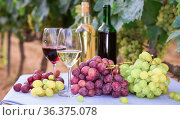 Bunches of red and white grapes, glasses with wine on a table in grape fields. Стоковое фото, фотограф Татьяна Яцевич / Фотобанк Лори