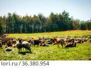 Sheep herd in the Dosenmoor in Schleswig-Holstein, Germany. Стоковое фото, фотограф Zoonar.com/Knut Niehus / easy Fotostock / Фотобанк Лори