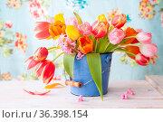 Frische bunte Tulpen in kleinem blauem Eimer. Стоковое фото, фотограф Zoonar.com/Barbara Neveu / easy Fotostock / Фотобанк Лори