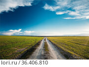 Dirty rural sandy road in green wheat field. Spring season. Meadow... Стоковое фото, фотограф Ryhor Bruyeu / easy Fotostock / Фотобанк Лори