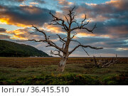 A tree trunk in the evening light over the Porlock Marshes, Somerset... Стоковое фото, фотограф Zoonar.com/Bernd Brueggemann / easy Fotostock / Фотобанк Лори