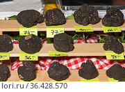 Burgundertrüffel (Tuber uncinatum) werden zum Verkauf angeboten, Trüffelmarkt... Стоковое фото, фотограф Zoonar.com/Pant / easy Fotostock / Фотобанк Лори