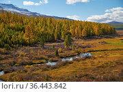 Altai river Kurkurek with larch forest on Eshtykel plateau. Стоковое фото, фотограф Serg Zastavkin / Фотобанк Лори