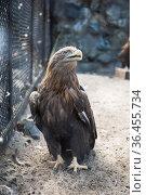 Beautiful eagle sitting. Стоковое фото, фотограф Jan Jack Russo Media / Фотобанк Лори
