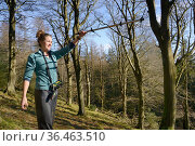 Catherine McNicol radiotracking in mixed Beech and coniferous woodland to locate radio-collared Grey Squirrels (Sciurus carolinensis) in the area where... Стоковое фото, фотограф Nick Upton / Nature Picture Library / Фотобанк Лори