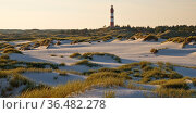 Duenen im Abendlicht mit dem Leuchtturm, Insel Amrum, Nordfriesland... Стоковое фото, фотограф Zoonar.com/Stefan Ziese / age Fotostock / Фотобанк Лори
