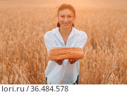 Woman Holding Homemade Wheat Bread In Hands In Wheat Field at Sunset. Стоковое фото, фотограф Zoonar.com/Max / easy Fotostock / Фотобанк Лори