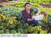 Portrait of woman farmer with basket of vegetables on field. Стоковое фото, фотограф Яков Филимонов / Фотобанк Лори