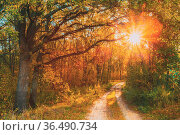 Forest Sandy Path Road Way Pathway On Sunny Day In Autumn Sunny Trees... Стоковое фото, фотограф Ryhor Bruyeu / easy Fotostock / Фотобанк Лори