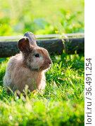 ESY-059718686. Стоковое фото, фотограф Zoonar.com/DZIERZAWA / easy Fotostock / Фотобанк Лори