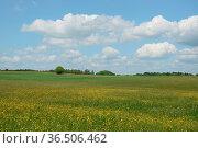 Baum, wiese, landschaft, wiese, westerwald, rheinland-pfalz, deutschland... Стоковое фото, фотограф Zoonar.com/Volker Rauch / easy Fotostock / Фотобанк Лори