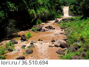 Die Waimea Falls nach starken Regenfällen im Waimea Valley auf Oahu... Стоковое фото, фотограф Zoonar.com/Dirk Rueter / easy Fotostock / Фотобанк Лори