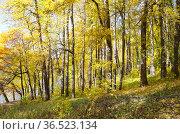 Осень в парке Царицыно в Москве, Россия (2018 год). Стоковое фото, фотограф Елена Коромыслова / Фотобанк Лори