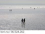 Wattwanderer bei Ebbe, Nationalpark Schleswig-Holsteinisches Wattenmeer... Стоковое фото, фотограф Zoonar.com/Stefan Ziese / age Fotostock / Фотобанк Лори