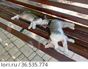 Котята спят на лавочке. Стоковое фото, фотограф Мария Кылосова / Фотобанк Лори