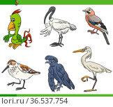 Cartoon illustration of birds animal species characters set. Стоковое фото, фотограф Zoonar.com/Igor Zakowski / easy Fotostock / Фотобанк Лори