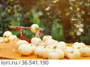 Apple peeler device stands on the table in the garden. Стоковое фото, фотограф Георгий Дзюра / Фотобанк Лори