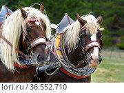 Georgiritt in Mittenwald, Bayern, zur Kapelle. Стоковое фото, фотограф Zoonar.com/Wolfilser / age Fotostock / Фотобанк Лори