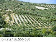 Sierra de la Subbetica, Andalusia,Spain. Стоковое фото, фотограф Frederic Soreau / age Fotostock / Фотобанк Лори