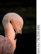 Graziler Vogel in Pink. Стоковое фото, фотограф Zoonar.com/Martina Berg / easy Fotostock / Фотобанк Лори