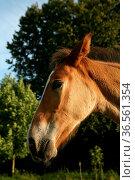 Araberporträt. Стоковое фото, фотограф Zoonar.com/Martina Berg / easy Fotostock / Фотобанк Лори