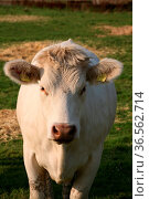 Fleischlieferant. Стоковое фото, фотограф Zoonar.com/Martina Berg / easy Fotostock / Фотобанк Лори