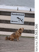 Mischling auf dem Weg zum Hundestrand. Стоковое фото, фотограф Zoonar.com/Martina Berg / easy Fotostock / Фотобанк Лори
