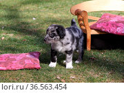 Hunde-Welpen. Стоковое фото, фотограф Zoonar.com/Martina Berg / easy Fotostock / Фотобанк Лори