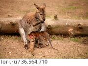 Erst mal schauen, ob in Mamas Beutel auch noch Platz für mich ist... Стоковое фото, фотограф Zoonar.com/Martina Berg / easy Fotostock / Фотобанк Лори