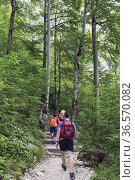 Triglav National Park, Upper Carniola, Slovenia. Hiking on marked... Стоковое фото, фотограф Ken Welsh / age Fotostock / Фотобанк Лори