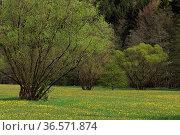 Sinntal, Wiesen, Bäume, Sträucher. Стоковое фото, фотограф Zoonar.com/Gerd Herrmann / age Fotostock / Фотобанк Лори