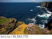 Steilküste, Orkney Inseln, Schottland   Steep Coast,Orkney Islands... Стоковое фото, фотограф Zoonar.com/GUENTER LENZ / age Fotostock / Фотобанк Лори