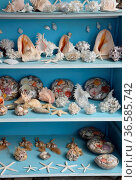 Souvenirs, Meer, souvenir, schnecke, schnecken, meeresschnecke, meeresschnecken... Стоковое фото, фотограф Zoonar.com/Volker Rauch / easy Fotostock / Фотобанк Лори