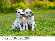 ESY-059796039. Стоковое фото, фотограф Zoonar.com/Judith Dzierzawa / easy Fotostock / Фотобанк Лори