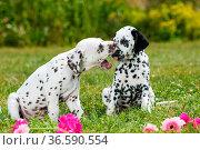 ESY-059796924. Стоковое фото, фотограф Zoonar.com/DZIERZAWA / easy Fotostock / Фотобанк Лори