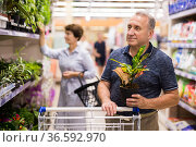 mature man choosing home plant in supermarket. Стоковое фото, фотограф Татьяна Яцевич / Фотобанк Лори