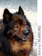 ZON-3939553. Стоковое фото, фотограф Zoonar.com/heinrich fuchs / age Fotostock / Фотобанк Лори