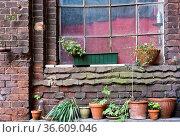 Blumenfenster einer alten Fabrik auf einem Berliner Hinterhof. Стоковое фото, фотограф Zoonar.com/Karl Heinz Spremberg / easy Fotostock / Фотобанк Лори