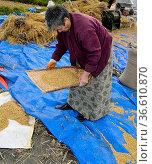 Bhutanesische Frau bei der Trennung von Spreu vom Reis mit Hilfe ... Стоковое фото, фотограф Zoonar.com/Stan / age Fotostock / Фотобанк Лори