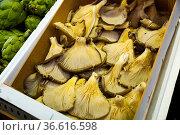 Oyster mushrooms for sale at the market. Стоковое фото, фотограф Яков Филимонов / Фотобанк Лори