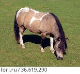 Pferd, Pferdekopf, Стоковое фото, фотограф Zoonar.com/Manfred Ruckszio / age Fotostock / Фотобанк Лори