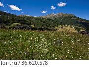 Biospärenpark Gurgler Kamm, Sölden im Ötztal, Tirol, Österreich. Стоковое фото, фотограф Zoonar.com/Günter Lenz / age Fotostock / Фотобанк Лори