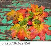 Herbst, blatt, blätter, ahornblatt, ahorn, laub, herbstlaub, bunt... Стоковое фото, фотограф Zoonar.com/Volker Rauch / easy Fotostock / Фотобанк Лори