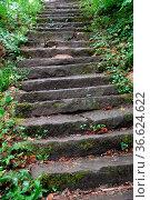 Treppe, stufen, treppenstufen, wald, steil, weg, wanderweg, pfalz... Стоковое фото, фотограф Zoonar.com/Volker Rauch / easy Fotostock / Фотобанк Лори