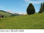 Seiser, Alm, Dolomiten, UNESCO-Weltnaturerbe, Dolomiti, Стоковое фото, фотограф Zoonar.com/Manfred Ruckszio / age Fotostock / Фотобанк Лори