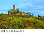 BW. bei Sulzfeld bunte Weinberge im Herbst , Burg : Ravensburg, Kraichgau... Стоковое фото, фотограф Zoonar.com/Bildagentur Geduldig / easy Fotostock / Фотобанк Лори