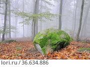 Fels, felsen, stein, steine, Nebel, Wald, stimmung, neblig, baum,... Стоковое фото, фотограф Zoonar.com/Volker Rauch / easy Fotostock / Фотобанк Лори