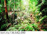 Trecking im Dschungel von Sarawak auf Borneo, Malaysia. Стоковое фото, фотограф Zoonar.com/Simone Buehring / easy Fotostock / Фотобанк Лори