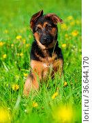 ESY-059925421. Стоковое фото, фотограф Zoonar.com/DZIERZAWA / easy Fotostock / Фотобанк Лори