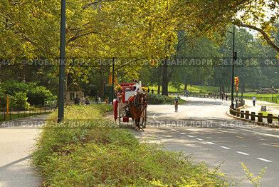 Horse-drawn carriage in Central  park. New York City